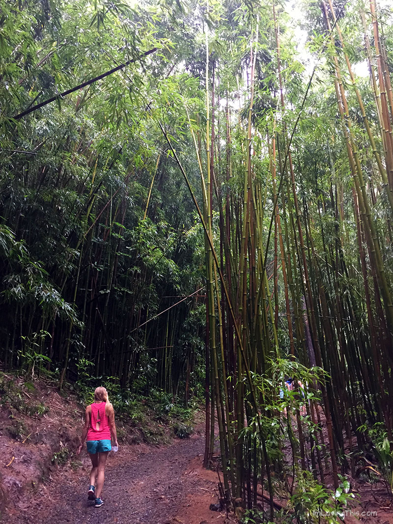 Manoa Falls Trail Oahu Hawaii