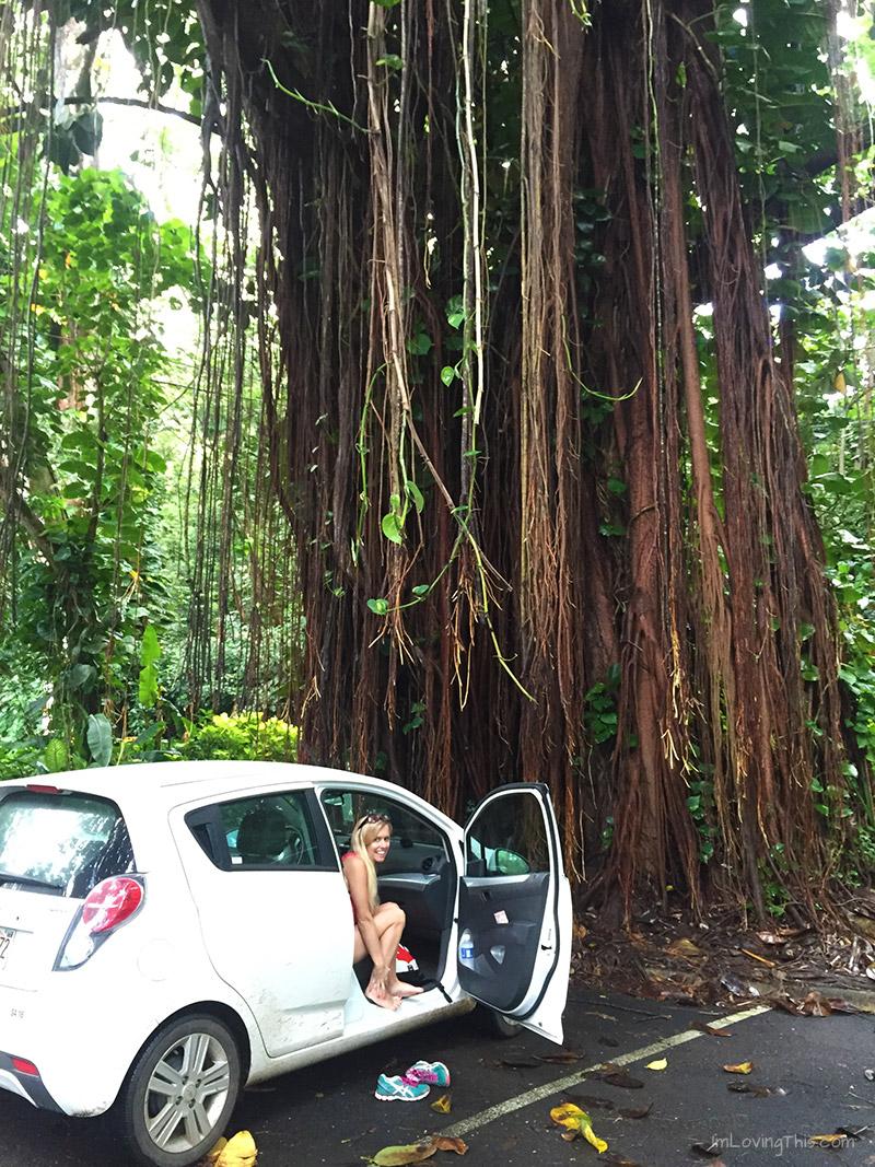 Manoa Falls Trail Parking Oahu Hawaii