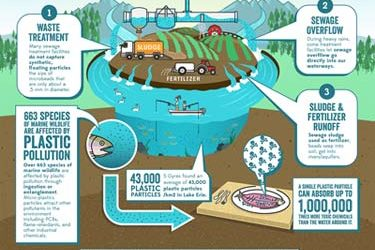 Stop Polluting Our Water with Microbeads