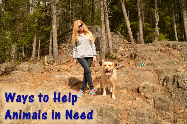 Ways to Help Animals in Need